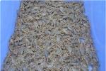 蝎子养殖密度多大合适,养蝎密度合理控制