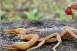 用什么方法加温养殖蝎子?
