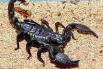 蝎子养殖用火墙怎么加温?
