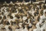蝎子养殖怎样建造燃池?如何加温?