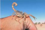 如何配制蝎子的混合饲料?